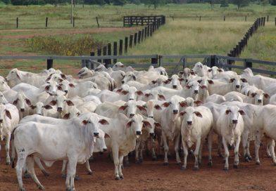 Nutrição de qualidade e genética contribuem para produção de carne mais macia para atender às exigências dos consumidores